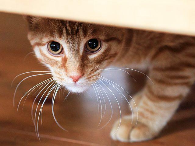 Vuurwerkangst Bij Katten Discus